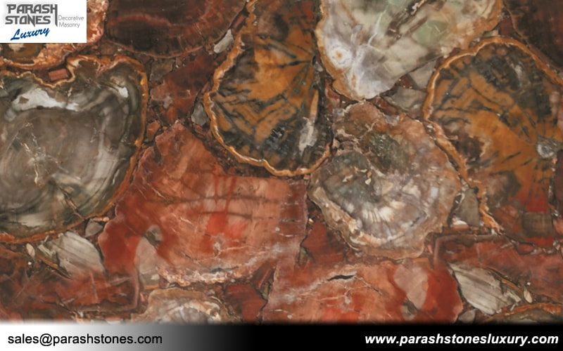 Petrified Wood Tiles Amp Slabs