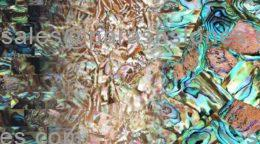 abalone shell slab, surface collection