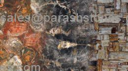 petrified wood slab collection