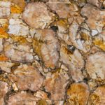 picture of yellow petrified wood slab, surface & tiles