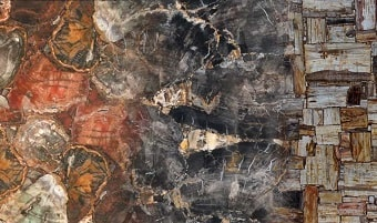 Petrified wood slab & surface collection