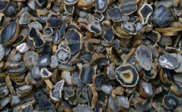 agate-slices-stock-raw